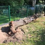 Grüner Gartenzaun Zaun bauen Frankfurt